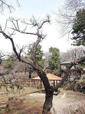 okurayama-170305_11_ca.jpg