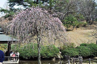 okurayama-170305_19_ca.jpg