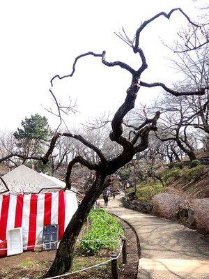 okurayama-170305_24a_ca.jpg