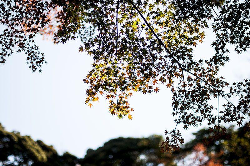 Engakuji_15_c.jpg