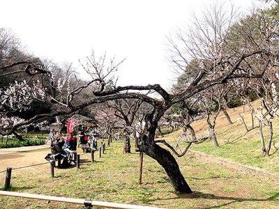 okurayama-170305_16_ca.jpg